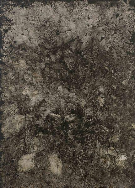 蔡獻友-植物史-13
