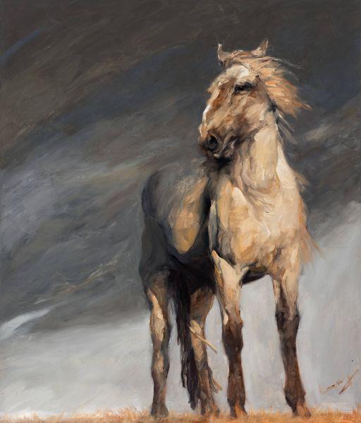 岑龍-汗馬|Akhal-Teke