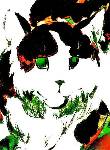 張忠弘-墨鏡貓