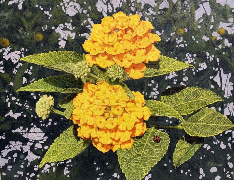 周錫安-無聲的讚頌-野地的花
