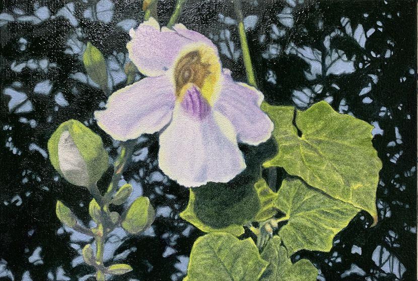 周錫安-鄧伯花A T.grandiflora/A