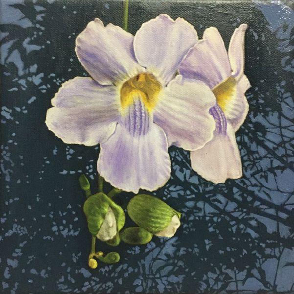 周錫安-鄧伯花B T.grandiflora/B