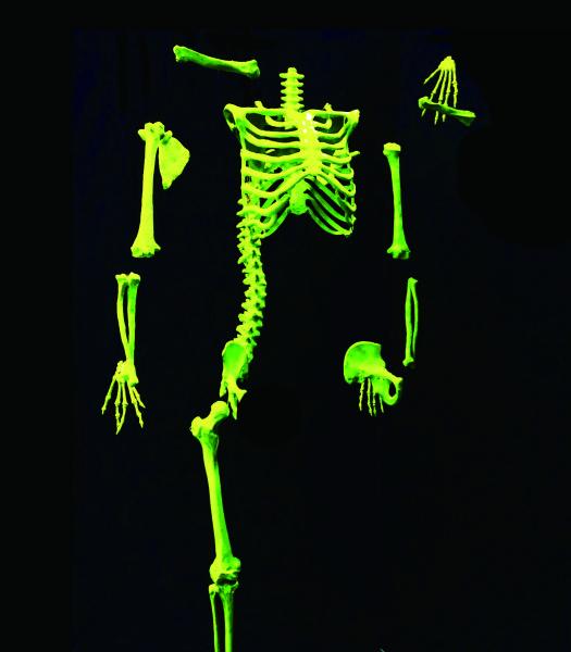 周凱葳-x-skeleton