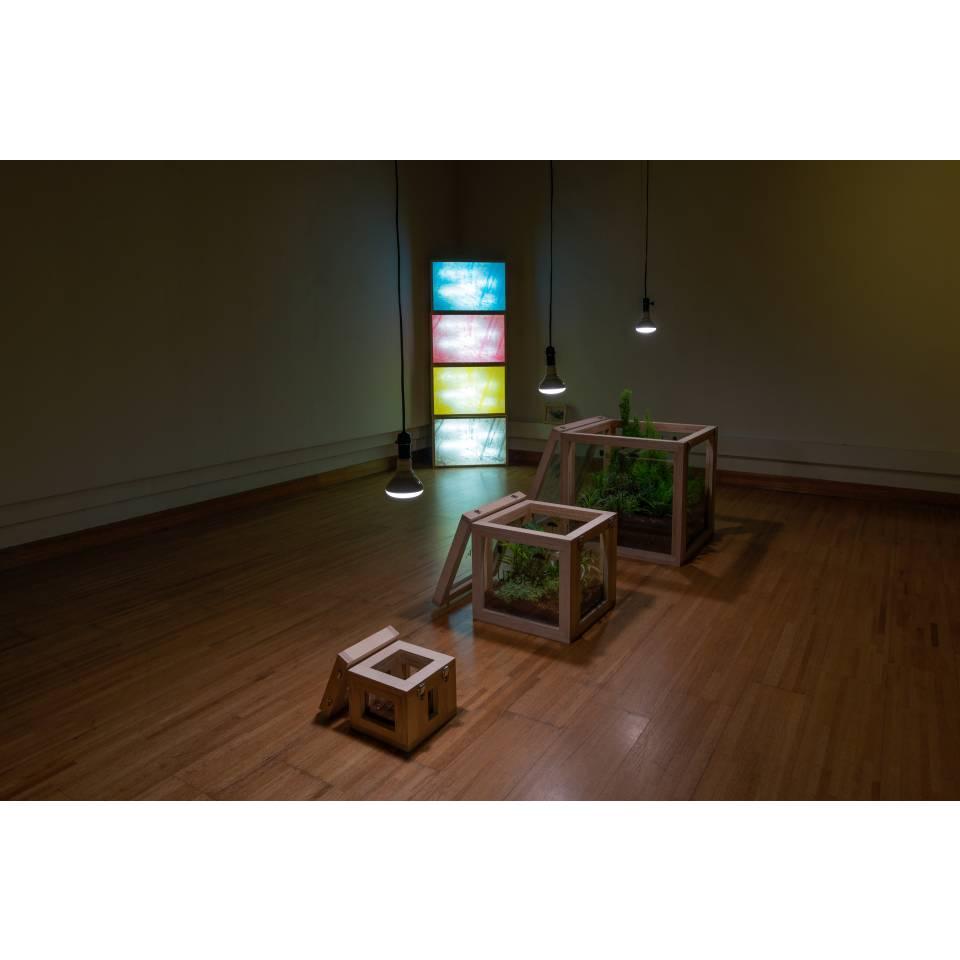 UTOPIA Light Boxes + UTOPIA Crates