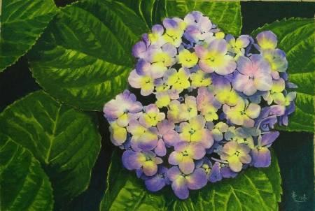 王素-繡球花