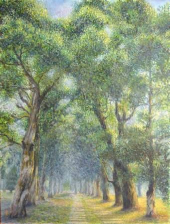 王素-白千層步道