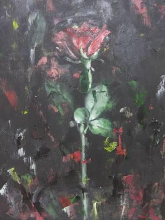 Mia-玫瑰
