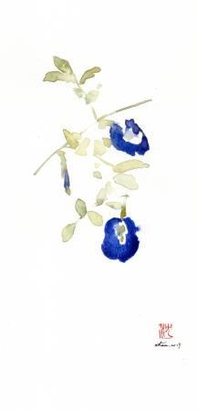 沈鈺華-蝶豆III