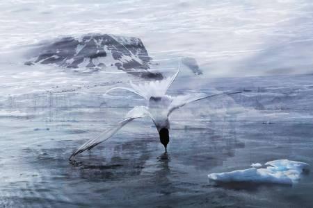 行云-心之極海