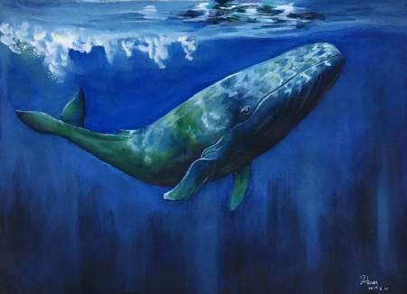 楊政寰-鯨