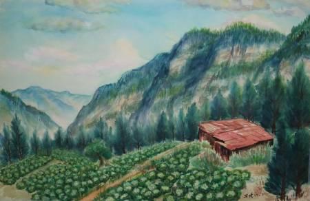李芳時-阿里山菜園
