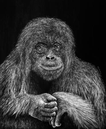 P.S Wu-哭泣的紅毛猩猩 Crying Orangutan