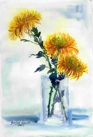 葛拉娜-Сhrysanthemums