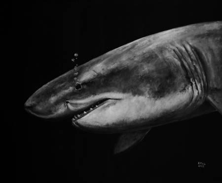 P.S Wu-哭泣的鯊魚 Crying Shark