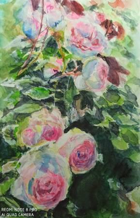 宋書華-陽光下的玫瑰花叢