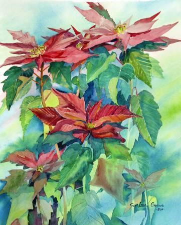 葛拉娜-聖誕紅 Christmas flower