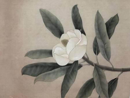 鍾麗香-洋玉蘭