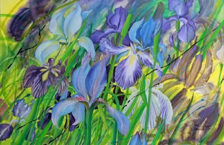 葛拉娜-Irises
