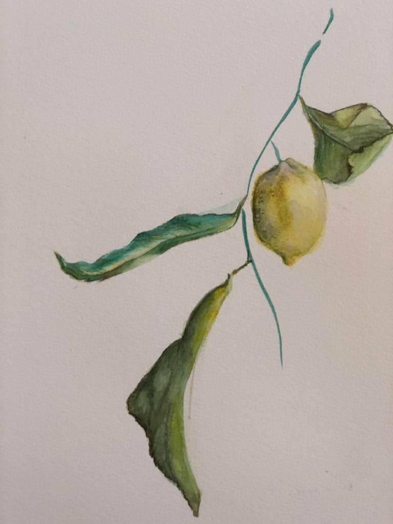 Danting-檸檬肖像