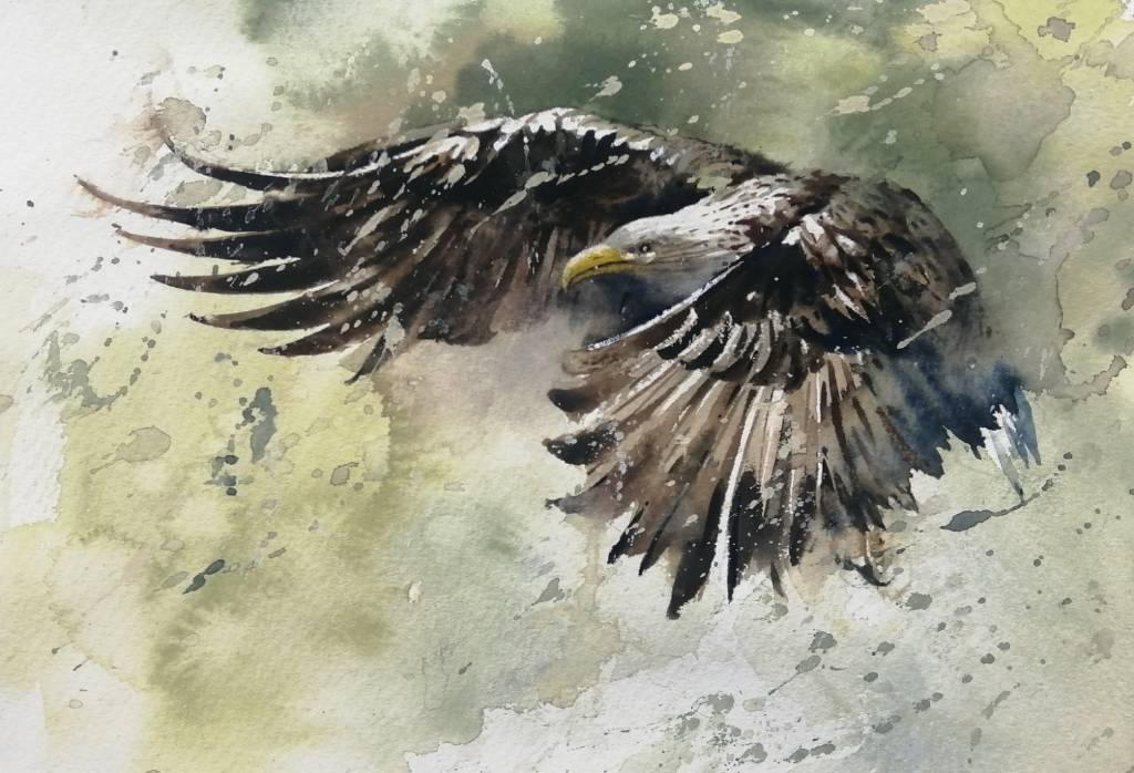 劉得興-老鷹